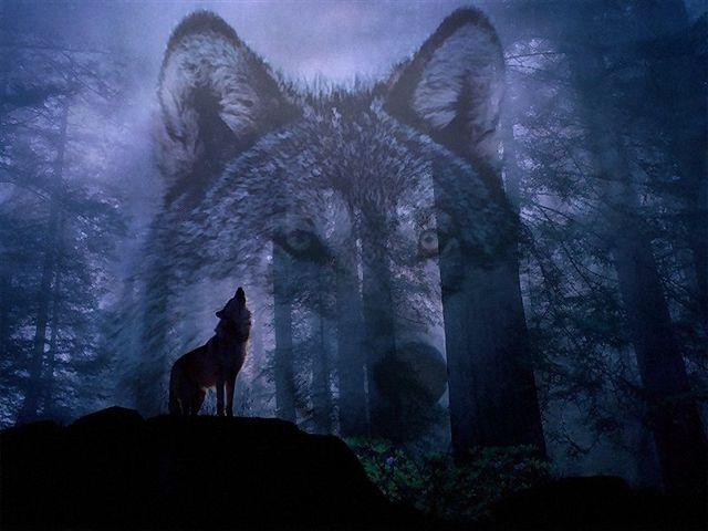 storia-lupo